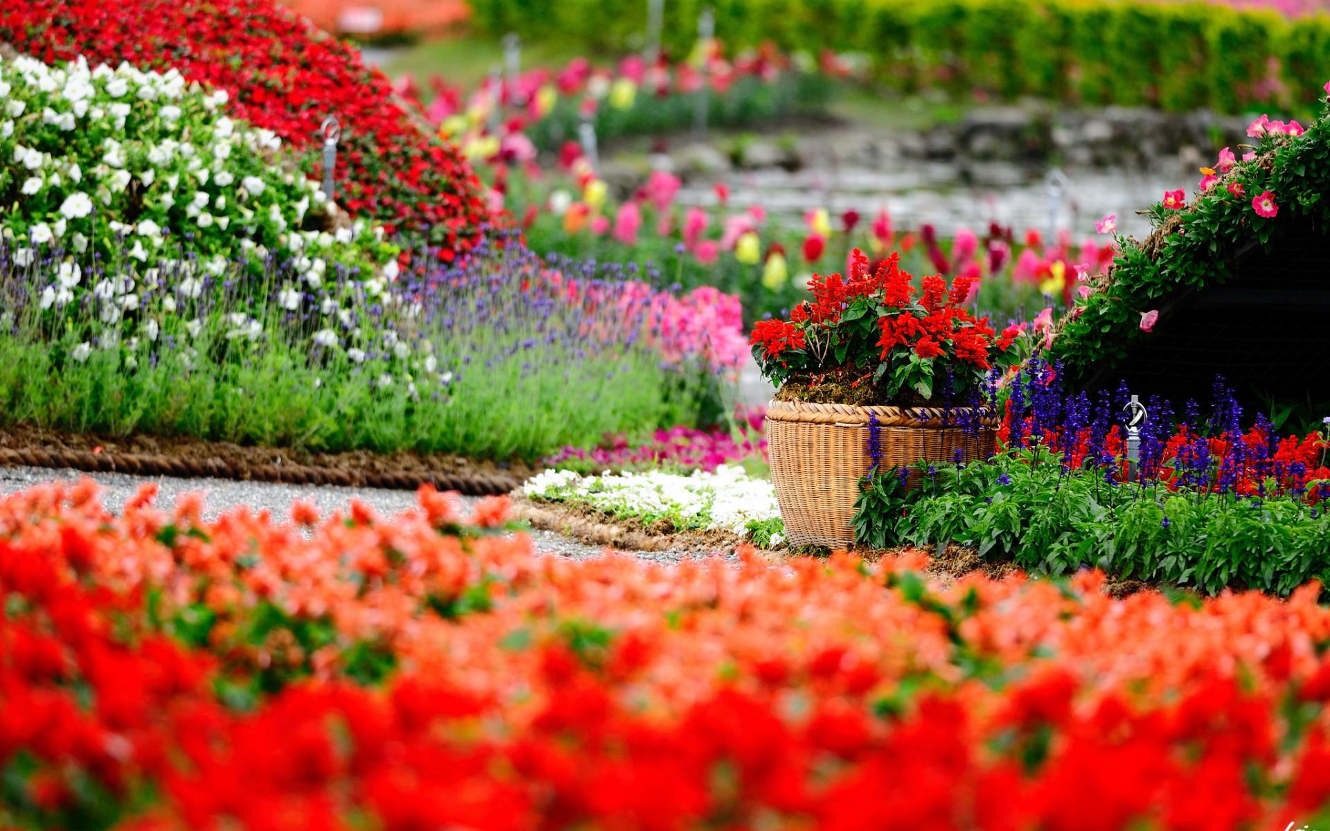 Zahrada v barvách
