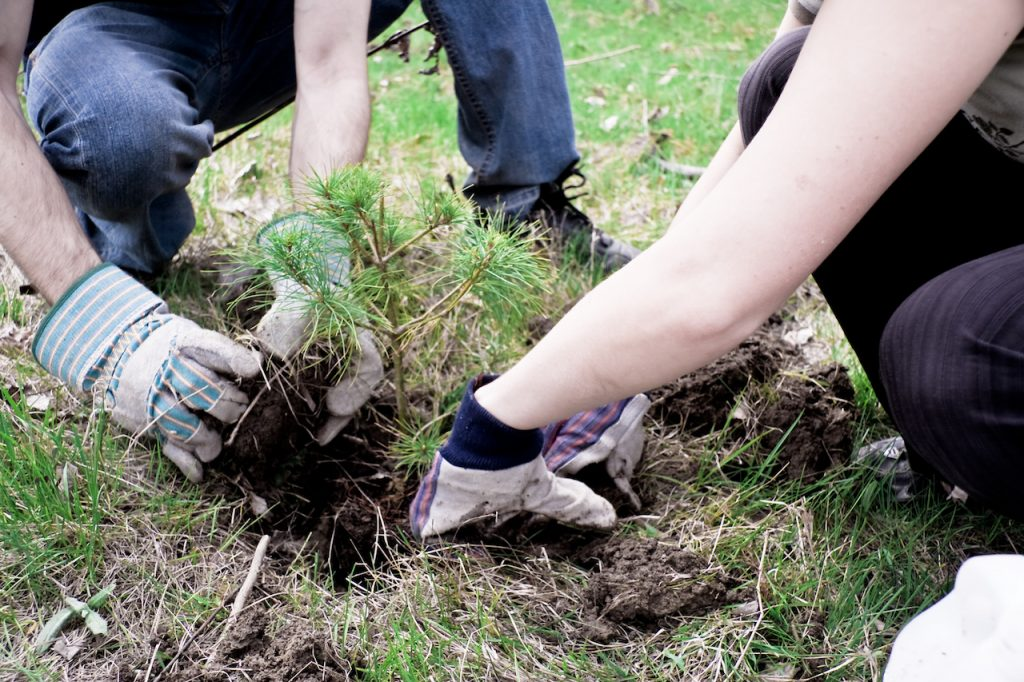 tree_planting_001